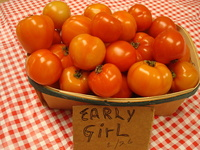Download_10.02_28_tomatoes_008
